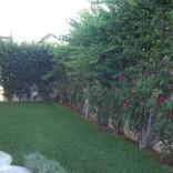 A louer rez de chaussée avec jardin à La Marsa